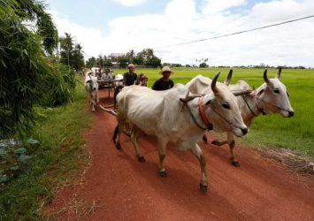 Japan firm plans deeper push into agro-tourism