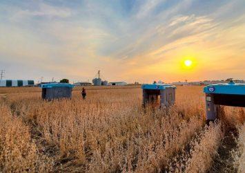 Alphabet's New Moonshot Is to Transform How We Grow Food