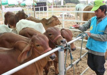 Commercial livestock output up 17%