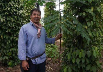 Living pepper pillars preserve trees