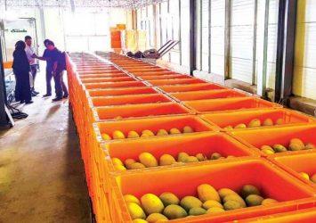 Cambodian mangoes edge closer to China
