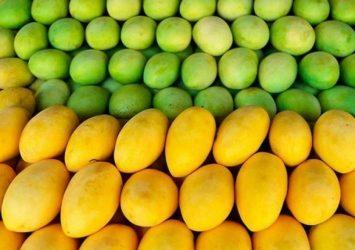 China customs size up mangoes