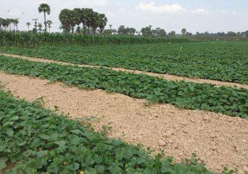 Siem Reap farmers adopt new irrigation method