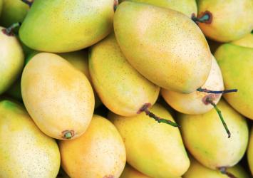 Biggest Buyer Of Mangoes