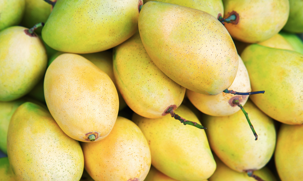Vietnam is the biggest buyer of Cambodia's mangoes